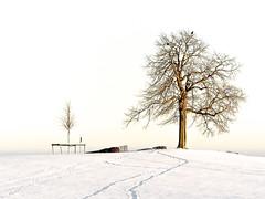 Baum auf einer Anhöhe (GerWi) Tags: schnee trees winter sky snow tree nature sport landscape outdoor natur january felder spuren himmel hike fields jogging landschaft bäume wintersport baum wandern attraction januar schneelandschaft reuth schneewandern ausflugsziel sportsart weiserhintergrund