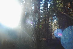 (nic lawrance) Tags: trees light shadow sun nature woodland shine pines corona