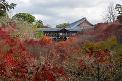 Toufuku-ji in Autumn (PV9007 Photography) Tags: autumn leaves temple leaf maple kyoto laub herbst tofukuji  kyouto      ahorn frbung   toufukuji herbstlaubfrbung