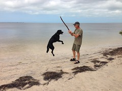 Jumpin' (Joanne Dale) Tags: sky rescue dog man beach gulfofmexico clouds outdoors sand joy happiness blacklab stick leaping iphone fetching joannedale actuallylabish heythatturnedoutprettywell