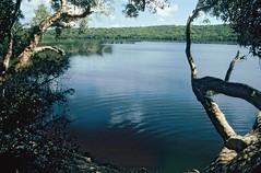 Ocean Lake, Great Sandy National Park, Fraser Island, Qld., October, 1998. (garratt3) Tags: lake film pentax australia qld queensland kodachrome aus fraserisland greatsandynationalpark