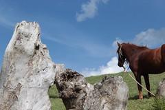 Buscando Libertad / Searching for freedom (Jorge.B.H) Tags: sky horse naturaleza nature animal azul clouds landscape caballo natural paisaje cielo nubes trunks troncos skyblue sinretoque