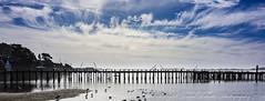 Bodega Bay morning (dschultz742) Tags: silhouette clouds nikon surf nikkor bodegabay d810 02122016