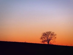 Savoring those Moments (dianealdrich - Please read my profile) Tags: winter sunset sun color beautiful rural landscape newjersey hill naturallight serenity serene february southjersey wintertree southjerseysunset southernnewjersey serenescene ruralscene ruralsunset