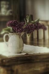 Lilas... (cruzjimnezgmez) Tags: stilllife flores bodegn lilas
