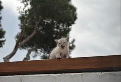 Gato (alvaroalex_333) Tags: cat garden jardin gato pequeo babycat gatopequeo bebegato