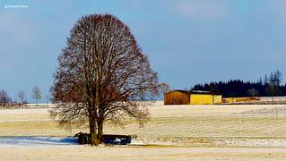 Forgotten Tree?