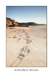 Kangaroo prints in the sand (sugarbellaleah) Tags: travel vacation holiday seascape beach landscape sand rocks sandy tracks footprints kangaroo nsw cave southcoast pawprints