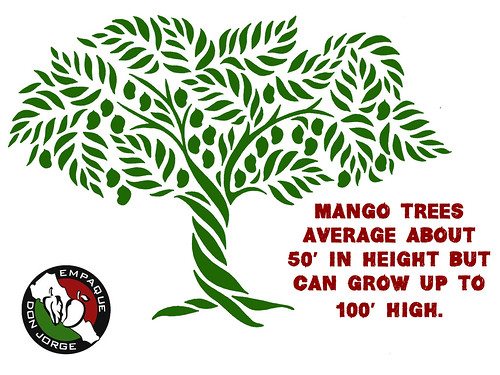 """Mango Tree Height • <a style=""""font-size:0.8em;"""" href=""""http://www.flickr.com/photos/139081453@N03/25458411780/"""" target=""""_blank"""">View on Flickr</a>"""