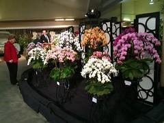 Display (cieneguitan) Tags: flower flora lan ran orkid okid angrek anggerek