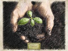 Fragrance Du Bois Plantations (Fragrance Du Bois) Tags: plantation oud oudh agarwood aquilaria fragrancedubois
