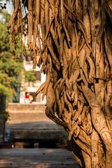 Pataleshwar_Caves_Pune-006 (Mrigank Gupta) Tags: heritage rock canon caves maharashtra nandi shiva pune nagar basalt shivaji rockcut maratha janglimaharaj pataleshwar mrigank rashtrakuta canon18135mm pataleshwarcaves panchaleshvara canon70d mrigankgupta mrigankphotography