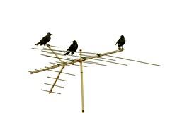 Antennae (Potent2020) Tags: highkey redmatrix vintage 3 abstract bird crows canon70d antennae antenna antennas