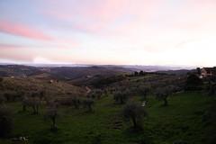 IMG_4794 (Valentina Ceccatelli) Tags: trees sunset italy canon eos no tuscany 5d prato valentina markii carmignano ceccatelli valentinaceccatelli tramontocountry