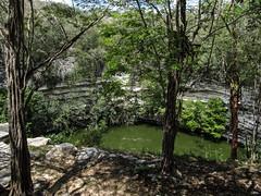 "Chichen Itza: la Cenote Sacrée <a style=""margin-left:10px; font-size:0.8em;"" href=""http://www.flickr.com/photos/127723101@N04/25864258541/"" target=""_blank"">@flickr</a>"