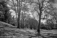 IMGP1148 (acornuser) Tags: park trees blackandwhite bw reflection water woodland garden landscape waterfall spring surrey cascade virginiawater blosom sigma1770 pentaxk3