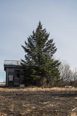 Selfoss (Fjola Dogg) Tags: pinetree pine canon iceland spring europe pad sland selfoss 2016 evropa rborg md grenitr evrpa rnesssla fjoladogg fjladgg canonpowershotg7x canong7x padfjoladogg mdfjoladogg
