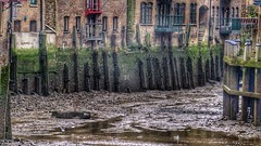London Wharfs At Low-tide (Thank you for 4M+ views.) Tags: wood houses seaweed london birds thames canon river landscape eos december mud tide low goods 7d algae dickens 169 merchants warehouses moorings markii nickfewings