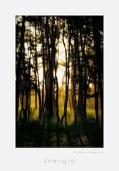 Bosque energtico, miramar, argentina (MarkRHurn) Tags: light argentina landscape glow ar places miramar atmospheric vivero provinciadebuenosaires bosqueenergtico