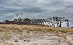 Weststrand bei Prerow (garzer06) Tags: strand landscape deutschland natur himmel wolken gelb grün bäume prerow baum dünen naturephotography weststrand mecklenburgvorpommern strandsand landscapephotography naturfotografie wolkenhimmel landschaftsbild landschaftsfotografie landschaftsfoto