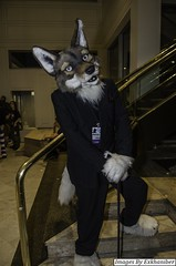 DSC_9708 (Exkhaniber) Tags: coyote fursuit 2015 anthrocon canid kurst hyperyote