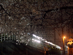 cherry-blossom viewing at night (matsugoro) Tags: night digital train pen cherry 28mm olympus cherryblossoms saitama zuiko tokorozawa seibuline epl2
