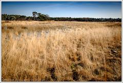 Sonse Heide (hypnotixed.com) Tags: nederland natuur son lente landschap noordbrabant staatsbosbeheer sonseheide sonsebossen