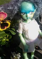 in the garden (Jemjoop Blythe/BJD) Tags: bjd ciaobella bambicrony fairyelfkiera