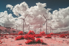 DSC_6351-Edit.jpg (THE THER COLLECTION) Tags: california pink nature ir outside nikon outdoor infrared dreamy wilderness valentinesday nofilter infraredphotography d300ir wildbayarea
