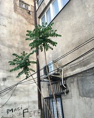 (omerozd) Tags: tree spring macedonia skope balkan bahar 3939 makedonya shkup uskup