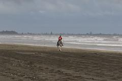 IMG_EOS 7D Mark II201604032395 (David F-I) Tags: horse equestrian horseback horseriding trailriding trailride ctr tehapua watrc wellingtonareatrailridingclub competitivetrailriding sporthorse equestriansport competitivetrailride april2016 tehapua2016 tehapuaapril2016 watrctehapuaapril2016