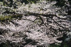 A blossom (White_Dragon_09) Tags: bauschlomb baltar 7523