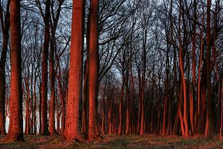 Küstenwald im Sonnenuntergang