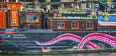 Rotterdam harbor (albyn.davis) Tags: pink windows netherlands colors boat rotterdam colorful houseboat