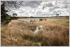 Langven, Sonse Heide, Nederland (hypnotixed.com) Tags: nederland natuur wolken lente ven landschap noordbrabant staatsbosbeheer sonsebossen sonseheidelangven