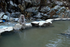 Well are you going in, or what? (Kyle Horner) Tags: japanesemacaque kanbayashi snowmonkeyresorts