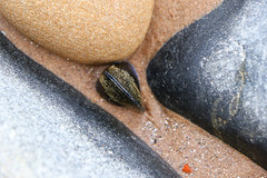 mussel shell (scilly puffin) Tags: sea beach water boats sand cromarty morayfirth