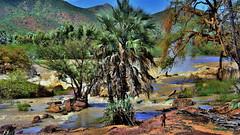 Kunene valley (flowerikka) Tags: river palms landscape valley namibia himba kunene