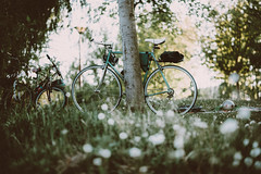 (:*`*:.Diey :*`*:) Tags: flower grass spring nikon 85mm retro bycicle vscofilm vscopresents