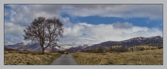 Tree by the Roadside (judmac1) Tags: mountains tree scotland highlands glen newtonmore invernessshire strath glenbanchor hillsandglens