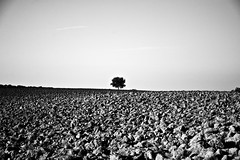 studio (jacklord) Tags: summer sky sun tree nature silhouette landscape blackwhite italia shadows estate earth live ground soil study gift tuscany lonely toscana bliss fertile