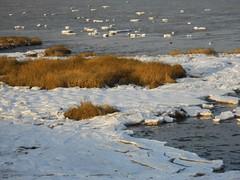 ijsschotsen (Omroep Zeeland) Tags: ijsschotsen
