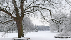 Winterliche Parklandschaft (Panasonikon) Tags: schnee winter harz degenershausen park winterwald panasonikon baum panasonic dmcfz50