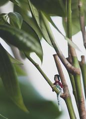 lucky charm. (mion.danny) Tags: plants plant blur 50mm nikon doll charm days luck lucky 365 f18 hazy d5000