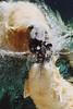 Untitled-26 (ucumari photography) Tags: ucumariphotography polarbear ursusmaritimus osopolar ourspolaire oursblanc oso bear animal mammal nc north carolina zoo niedźwiedźpolarny الدبالقطبي 北极熊 jääkarhu eisbär ísbjörn orsopolare シロクマ полярныймедведь 북극곰 december 2003 wilhelm willy willie masha 北極熊
