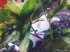 (maidenight1212) Tags: flowers naturaleza cats pets flores nature beauty perfect gatos cateyes mascotas eos1200d