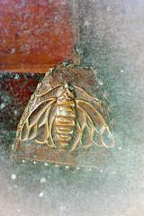 20160120_131904 R (C&C52) Tags: sculpture closeup lampe mtal dcoration abeille insecte objets basrelief phoneshot cuivre artnumrique