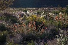 Towne Pass, Death Valley (Jeffrey Sullivan) Tags: california park trip travel flowers copyright usa jeff nature canon landscape photography death photo nationalpark national valley deathvalley wildflowers sullivan allrightsreserved 2014