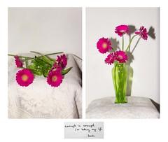 Enough is Enough... (Sophie.Dituri) Tags: life pink flowers color green photo still emotion sophie conceptual emotive empathy koryn dituri sophiekoryn