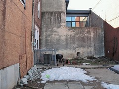 Empty lot with small yard_jpg (ted cavanagh) Tags: yards snow reflections fences walls airconditioners southphiladelphia barbecues